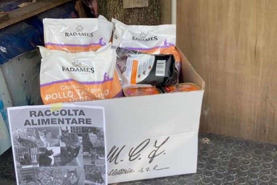 Raccolta alimentare – COLONIA felina 613